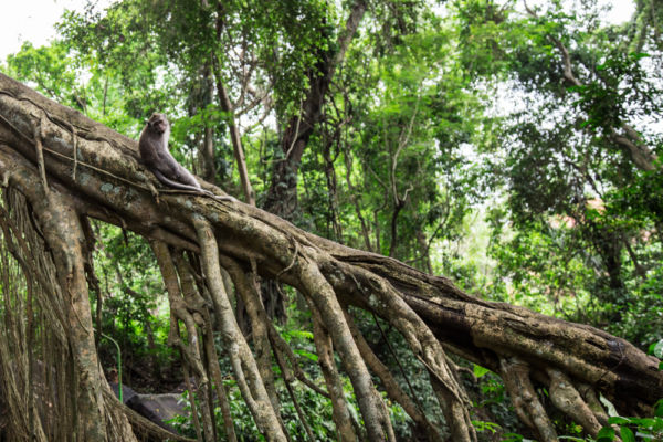 Tempio delle Scimmie, Bali ©Mapi Rizzo