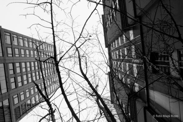 Verso l'alto ©Mapi Rizzo